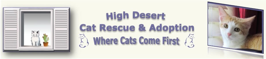 High Desert Cat Rescue & Adoption: Where Cats Come First